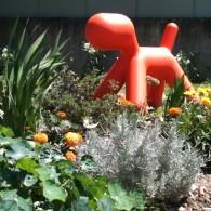 Le chien dans le jardin