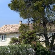 La maison et le pin